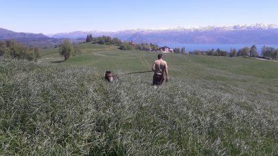 Gras stripe